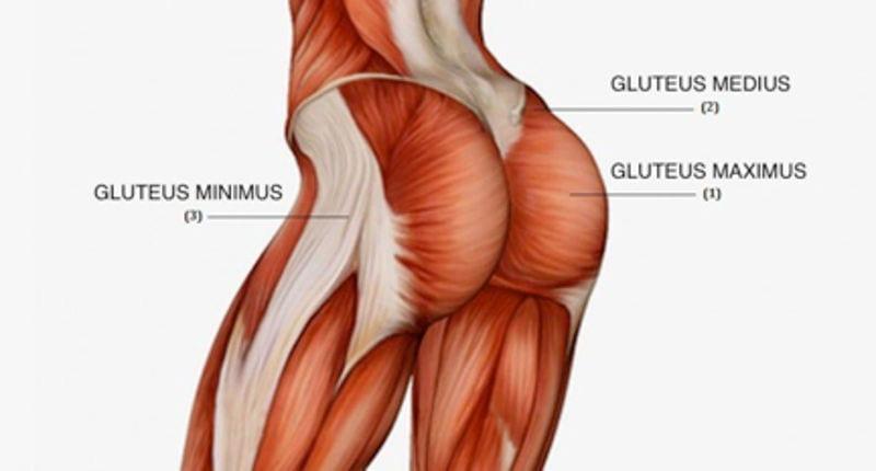 musculos_gluteos